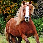 Autumn Horse by appfoto