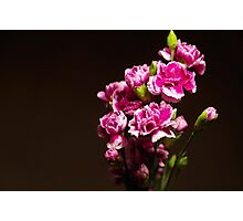 Carnations Photographic Print