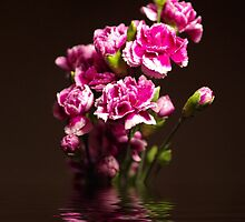 Carnations flood by Maria Tzamtzi