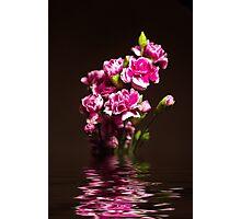 Carnations flood Photographic Print
