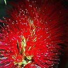 Bottle Brush Glow by Lozzar Flowers & Art