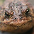 Toad Face Close Up by SmilinEyes