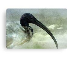 A beautiful Ibis Canvas Print