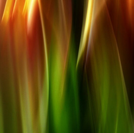 Bouquet of tulips - edition 4 by Ronny Falkenstein