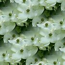 Pretty White Dogwood Flower Blossoms by SmilinEyes
