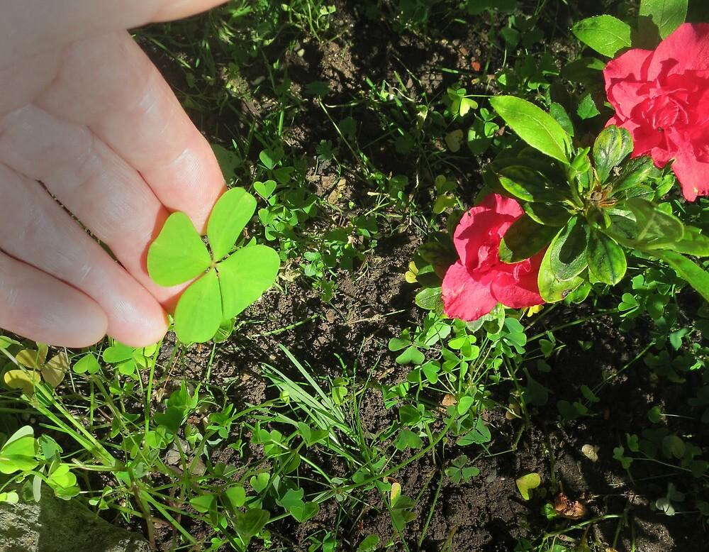 Four Leaf Clover by David Denny