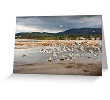 Taking flight, Lake Rotorua Greeting Card
