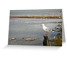 Seagull, Lake Rotorua Greeting Card
