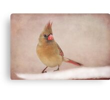 Mrs. Cardinal's Bad Hair Day ~ Canvas Print