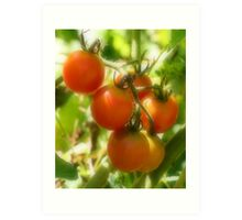 Red Cherry Tomatoes On The Vine Art Print