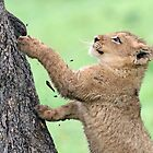 I don`t think i can climb this tree!! by jozi1