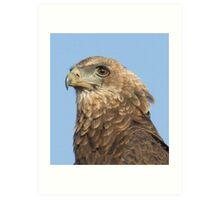 Juvenile Bateleur Eagle Art Print