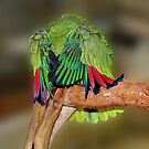 Silly Yellow Naped Amazon Parrot by SmilinEyes
