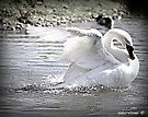 In A Flap by naturelover