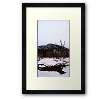 Stagnant Puddles and Decaying Trees Framed Print