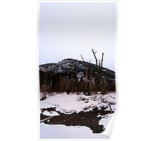 Stagnant Puddles and Decaying Trees Poster