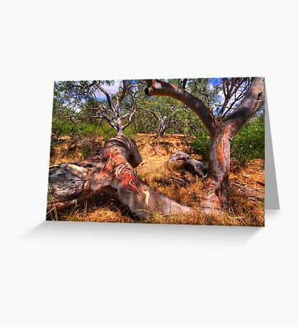Dry Watercourse. Greeting Card