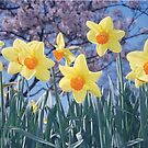 Signs of Spring by Photo-Bob