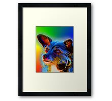 Terrier Mix Dog Adoring Eyes In Abstract Framed Print