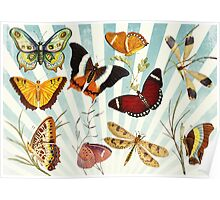 Vintage Butterfly poster Poster