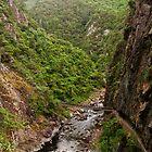 Cliff Walls, Karangahake Gorge by Dilshara Hill