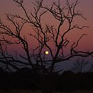 Dead tree and moon.  by Campbell Miller