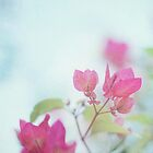 A little pink by AngelaFanton