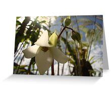 Sunlit white flower Greeting Card