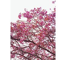 Spring Bright Pink Blossom Photographic Print