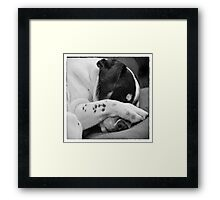 Jack Russell Terrier Dog Asleep in Cute Pose Framed Print