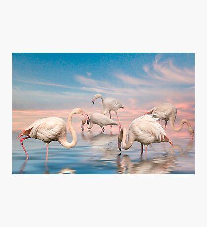 Flamingo Lagoon Photographic Print