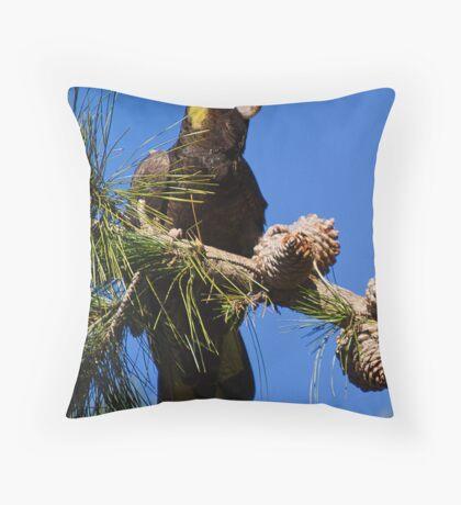 australia birds -- yellow-tailed black-cockatoo Throw Pillow