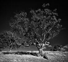 Majestic tree #4 by Lee Hopkins