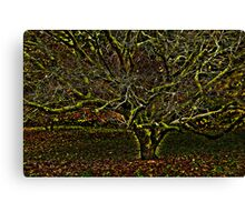 hdr tree Canvas Print
