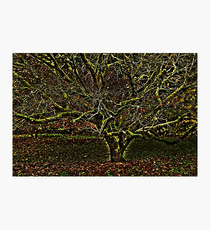 hdr tree Photographic Print