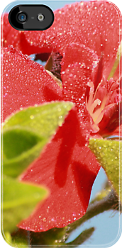 red geranium with dew by Jicha