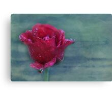 there is no such thing as an ordinary rose... Canvas Print