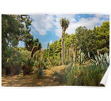 Cactus Plants Landscape Poster