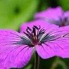 summer flower by murch22