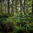 In The Deep Woods by Charles & Patricia   Harkins ~ Picture Oregon