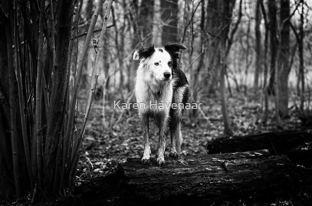 In the Forrest by Karen Havenaar