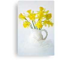 Sweet Daffs Canvas Print