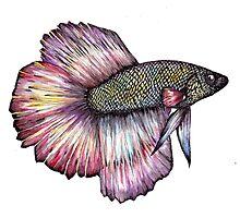 Bright Fish Photographic Print