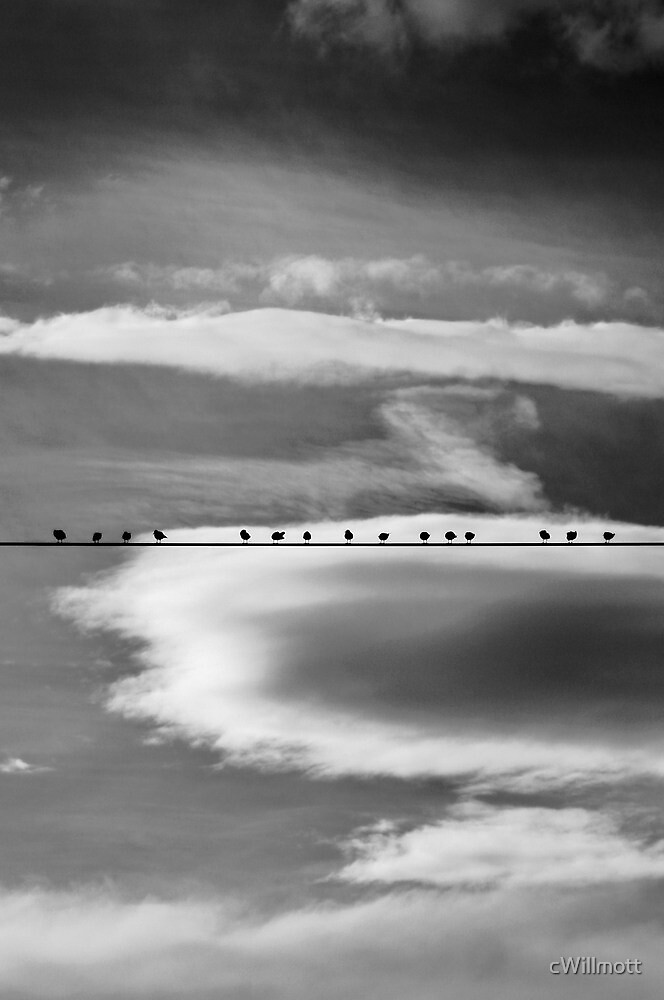 Birds on a Wire by cWillmott