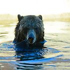 Grizzly Bear by Ty  Cobb