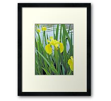 Iris And The Bee Framed Print