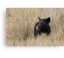 Happy Hog Canvas Print
