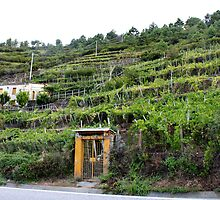 Vineyards of Cinque Terre by Andrea  Muzzini