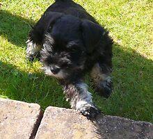 new puppie by Tom Windsor