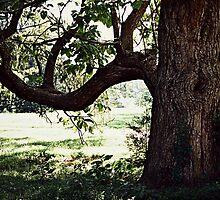 Tree of Life by DAVID  SWIFT